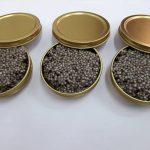 قیمت خاویار سوروگا در بازار جهانی